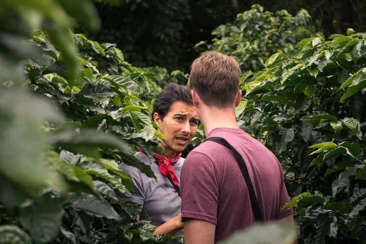 Coffee Plantations Costa Rica Agriculture Men Picking Plant Real People Two People Working