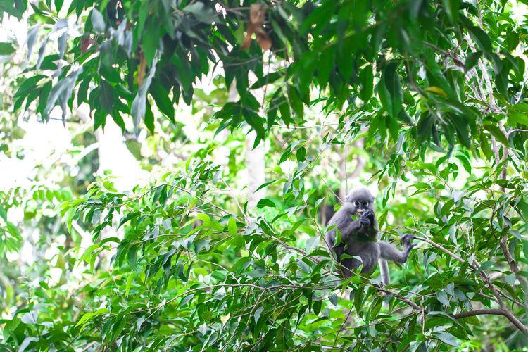 View of monkey on tree