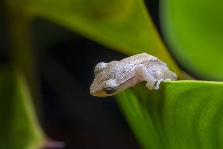Close-Up Of Frog On Leaf