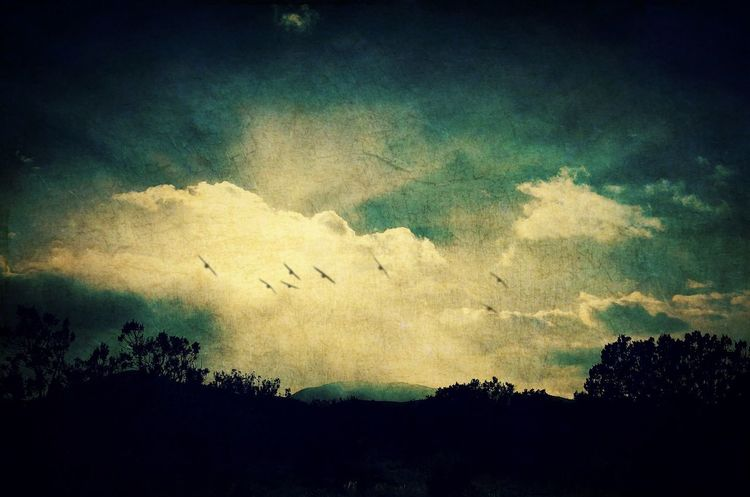 """""""Misty Mountain Flight"""" Clouds And Sky Clouds New Mexico Photography New Mexico Skies New Mexico Birds In Flight Sunsets Sunset Silhouette Sky Nature Outdoors Beauty In Nature No People Bird Flying"""
