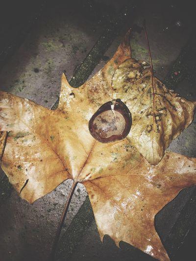 One Nature No People San'ati Laziz Искусство от Лазиза Art By Laziz London Photography Nightphotography Leaf Fallen Beauty In Nature Maple Ground Nature Tabiat Yak Одна Природа