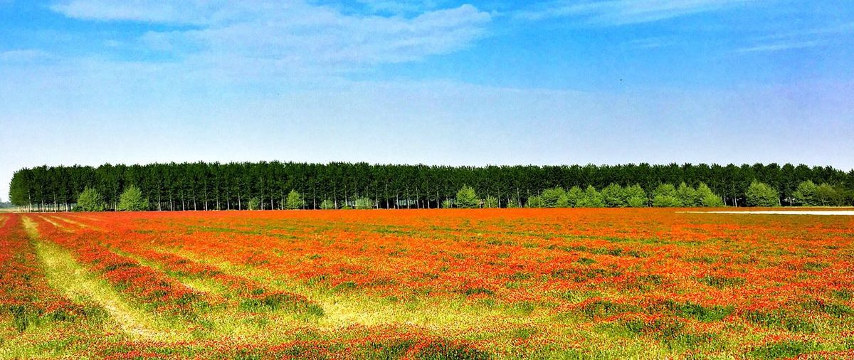 Plant Sky Growth Beauty In Nature Landscape Agriculture Field Environment Nature Rural Scene Land Tree Tranquil Scene Freshness Tranquility Day Flower Flowering Plant Scenics - Nature No People