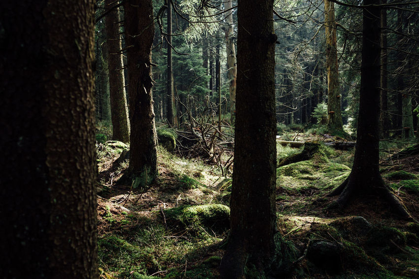Moody time Beauty In Nature Day Environment Forest Germany Growth Harz Harzmountains Land Nature No People Non-urban Scene Outdoors Plant Remote Scenics - Nature Sunlight Tranquil Scene Tranquility Tree Tree Trunk Trunk WoodLand