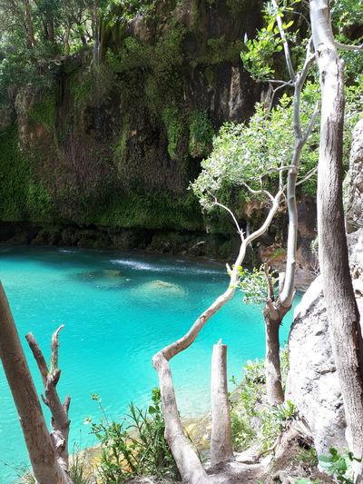 ایران Iran فارس طبیعت Nature Amazing Tree Water Branch