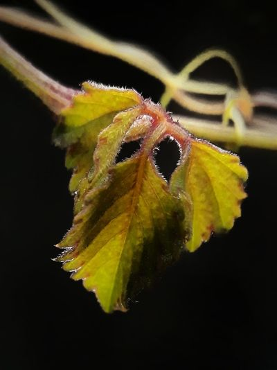 leaf with black