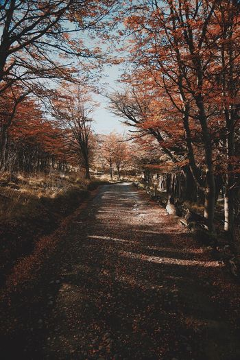 Empty road amidst trees during autumn