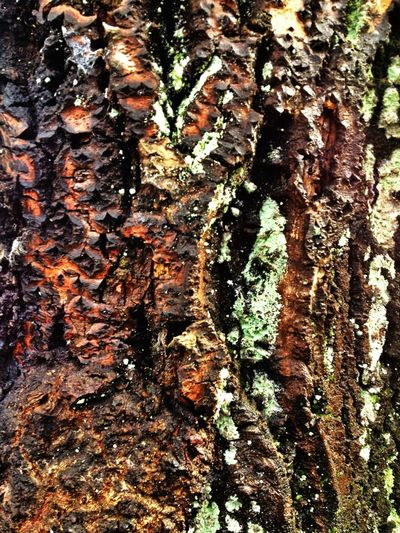 Lichen Beautiful Bark Wood You?