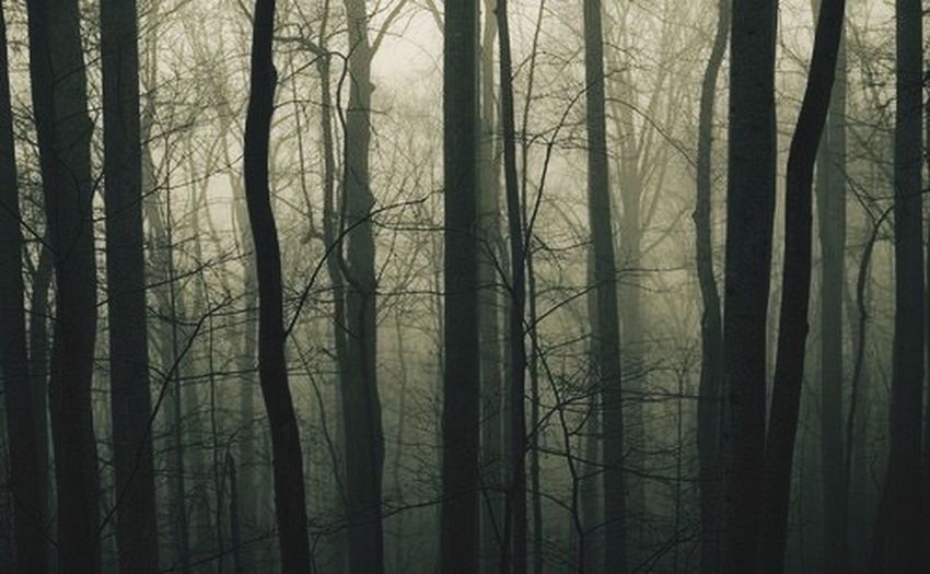 Even when you are in the darkest place of earth their will always be an guiding light ? The Guiding Light Dark Woods