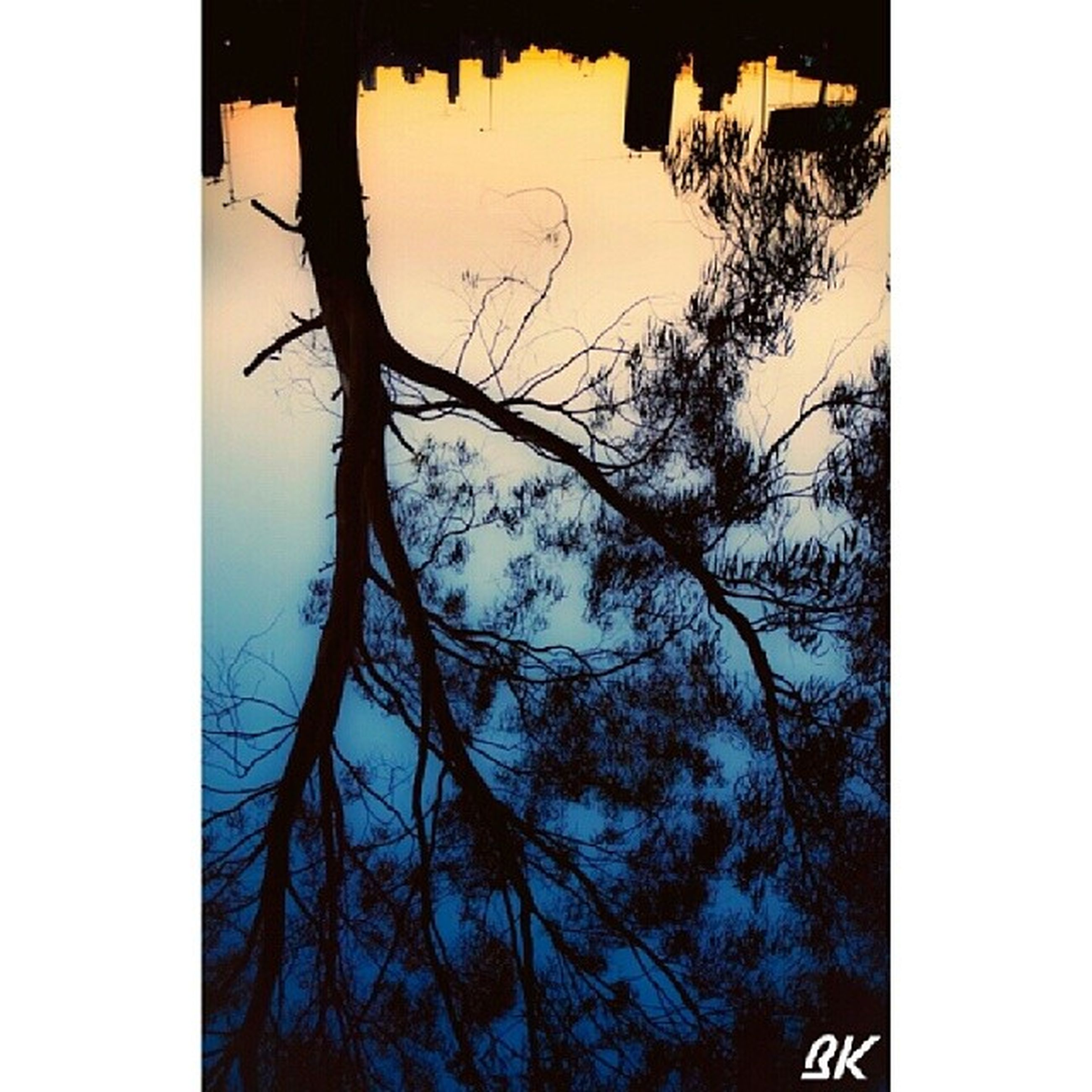 transfer print, auto post production filter, tree, bare tree, branch, tree trunk, clear sky, silhouette, low angle view, nature, tranquility, sky, day, outdoors, no people, window, beauty in nature, growth, tranquil scene, scenics