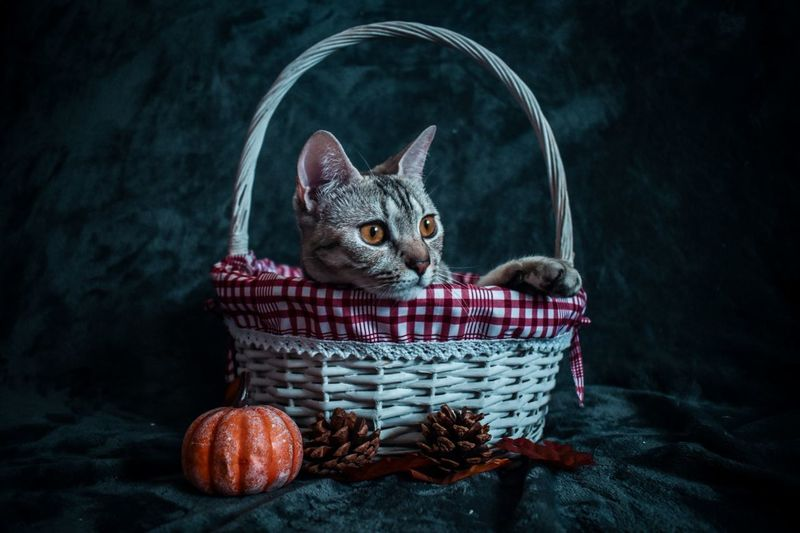 Portrait of cat sitting in basket