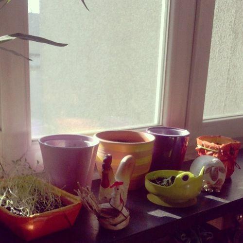 Misja Wiosenny Ogrodek rozpoczeta :)