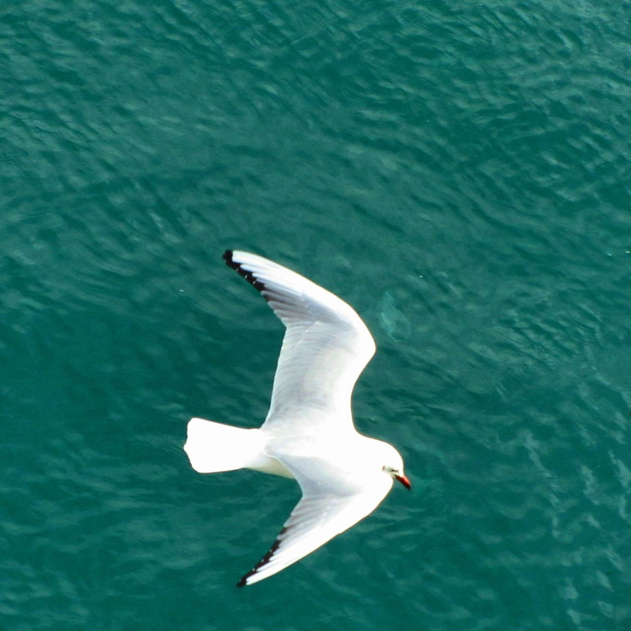 Seagull Flying Over Sea