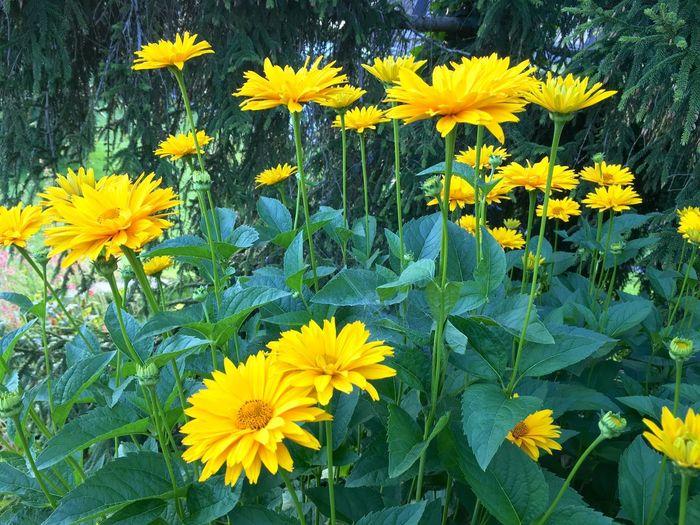 Blumenpracht🌺🍃 Blumen Blumen *~*