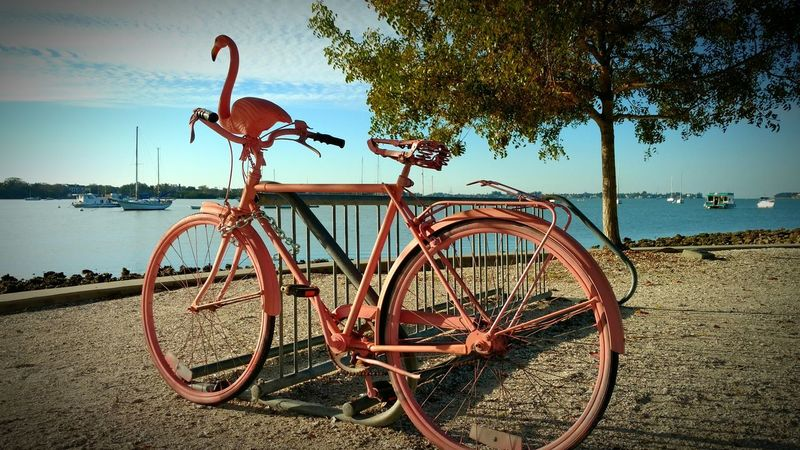 Flamingo Bike Pink Flamingo Retro Style Bicycle Parking Antique Vintage Bike Unique Style Unique Design Pink Bike Park View Bay Side Bicycle Seeing Bycycles Taking Photos 2 Wheel Up Close Waterfront Parked