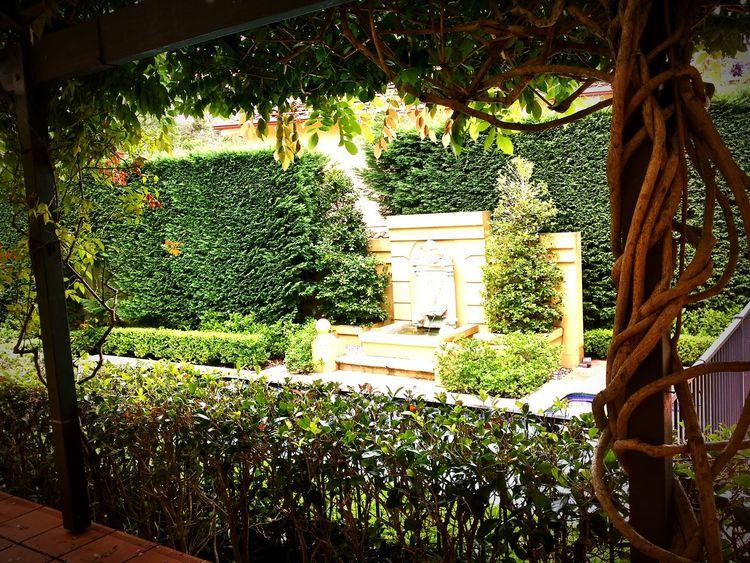 Backyard Nature EyeEm Nature Lover Vintage Vintage Moments Vintage Photo Garden Poolside Framedbynature