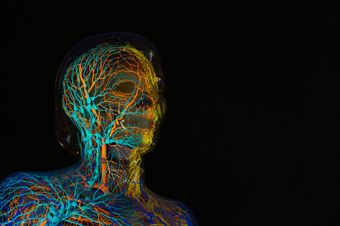 At the Museum Mensch und Natur (People and Nature) Abstract Backgrounds Black Background Blood Vessels Body Structure Model Futuristic Museum Mensch Und Natur Nerves Sceleton