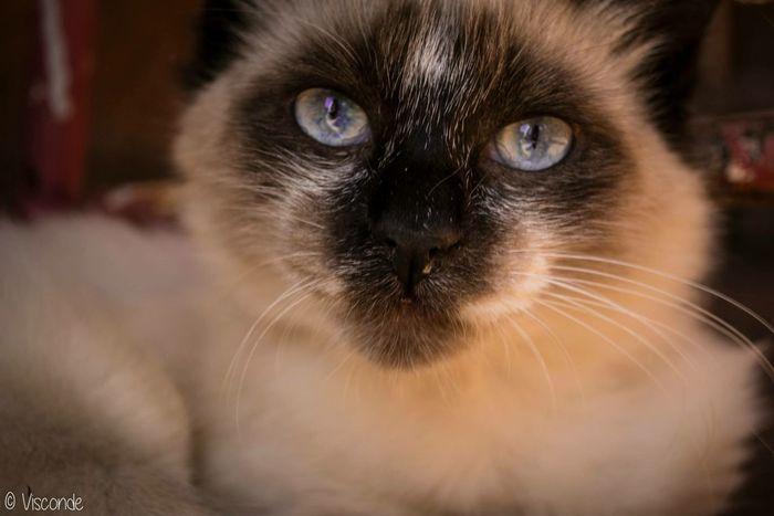 Hi!!! 😺 I❤️cats Beautiful Ilovemycat Hello World Love Hi! Perfect Cat Mycat♥ Cats