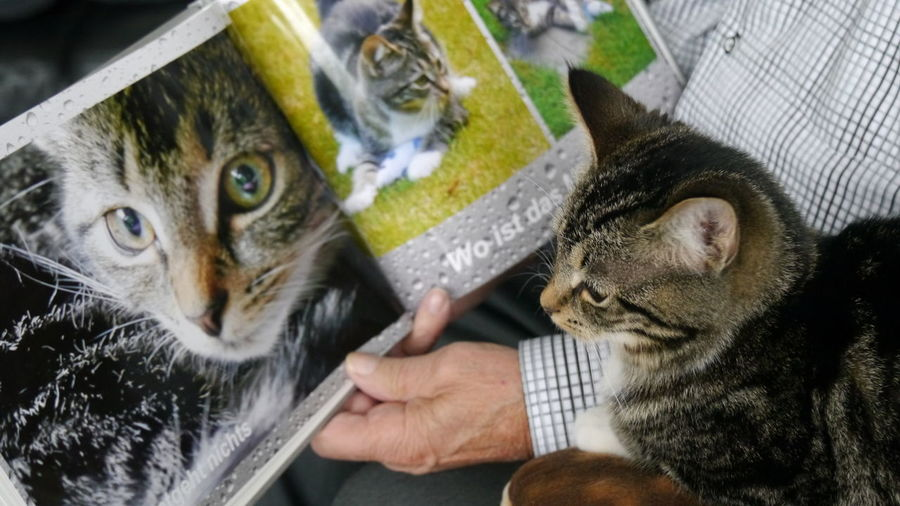 watching the model book ;) Cat Close-up Domestic Cat EyeEm Gallery Eyem Gallery Friendship Human Body Part Looking At Camera Pets Photobook Portrait Still Life Togetherness Watching A Book Birthday Present Handmade For You Pet Portraits