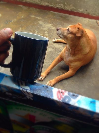 I Love My Dog Coffee And Cigarettes