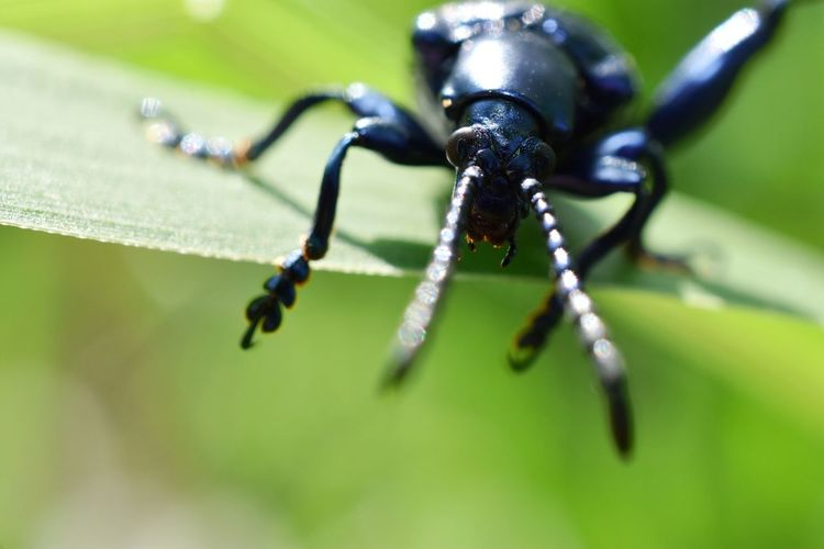 Beauty of the beetle in the garden. Beetle Macro Close-up Animal Themes Green Color