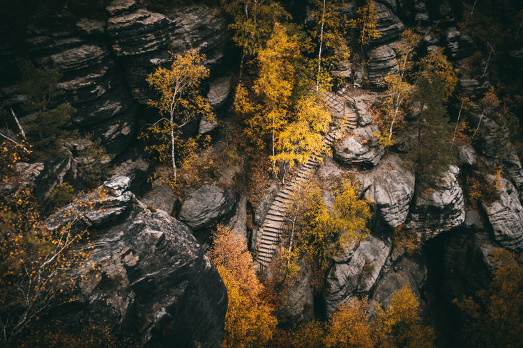 High Angle View Of Rocks In Forest