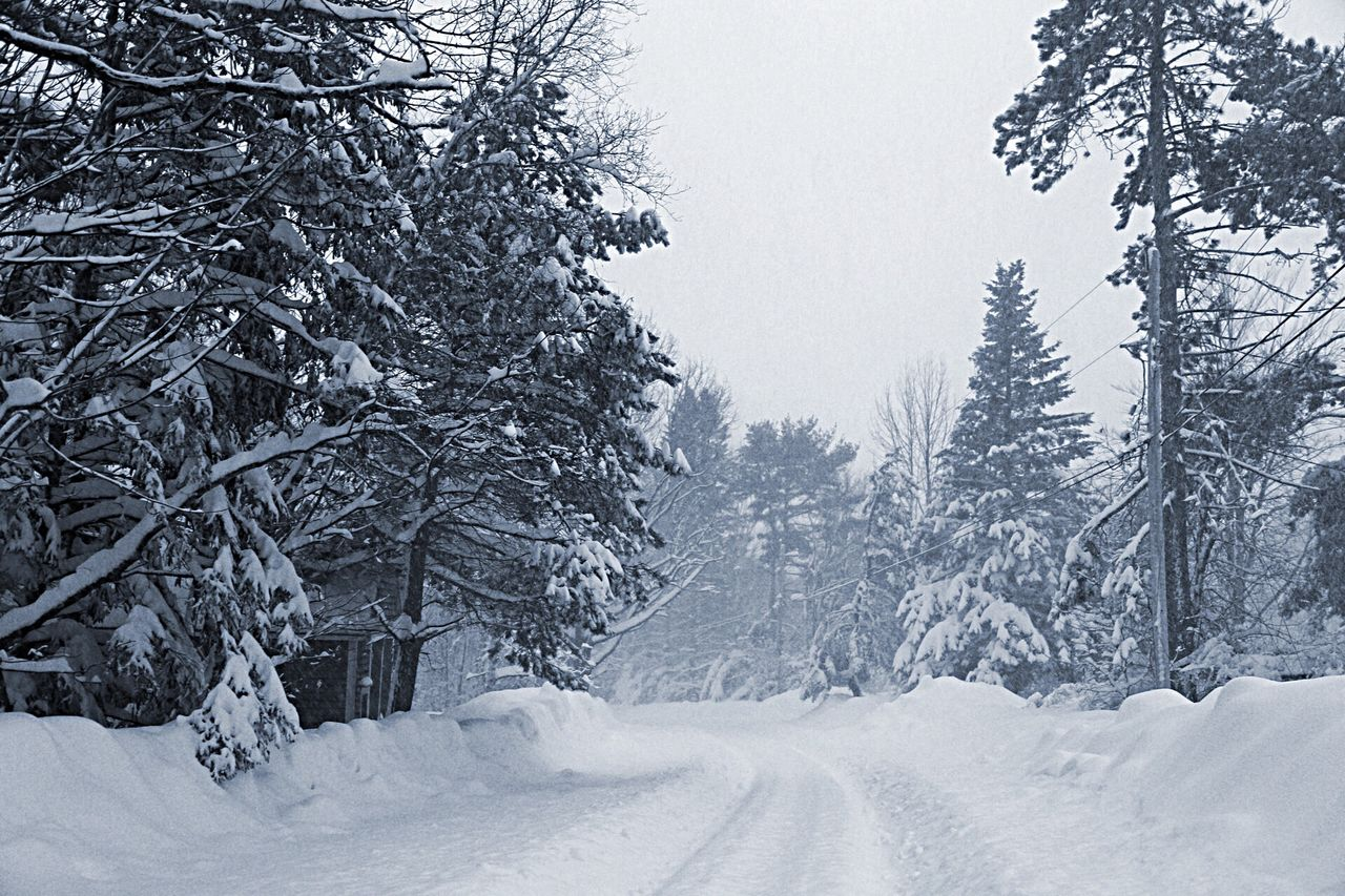 View Of Road Among Trees Covered With Snow