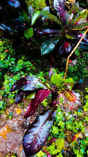 Morning Rain Wet Plants Beginnerphotographer Nature Multi Colored Outdoors