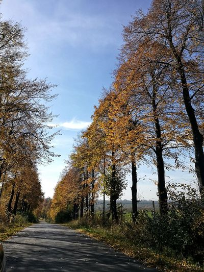 Polska złota jesień Nature No People Sky Autumn