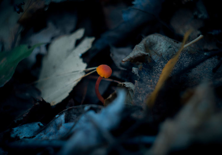Some details from the forest, the little things . Fungi Plant Selective Focus Close-up Nature Outdoors Forest Photography Forest Floor Details Magic Natural No People Jack Nobre Canada