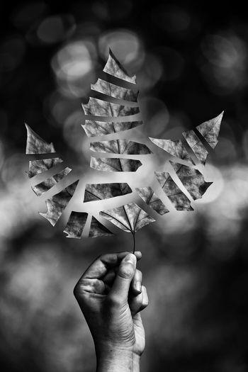 Autumn Autumn Leaves Black & White Light Natural Light Blackandwhite Blurry Background Edition Focus Holding Human Finger Human Hand Leaf Magic Nature Photography EyeEmNewHere