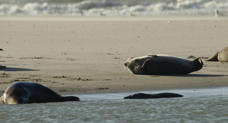 Cute seals at