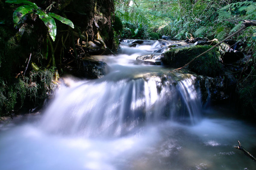 Score Valley, Ilfracombe Beauty In Nature Blurred Motion Day Environment Flowing Flowing Water Forest Freshness Long Exposure Motion Nature No People Outdoors Rock - Object Running Water Scenics Speed Stream - Flowing Water Tranquil Scene Tranquility Tree Water Waterfall
