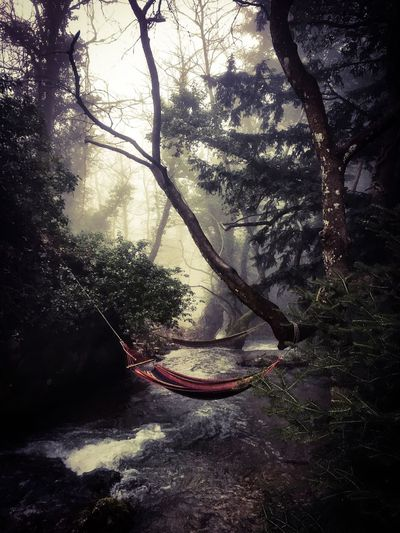 Greece Parnassos Mountain Swing River Forest Nature Beauty In Nature Outdoors No People Scenics Tranquil Scene Tranquility Tree Travel Destinations Travel Photography Forestwalk Wintertime