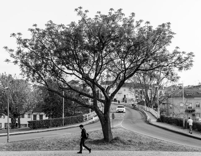 Tree Man Road Multiple People Coimbra Portugal Tree Plant Real People Nature Day City Sky Men Lifestyles Street Walking Outdoors Road EyeEmNewHere