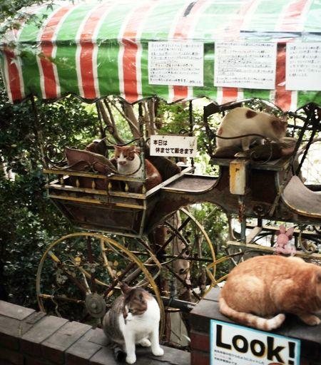 哲学の道 猫の休日 京都 Streetphotography FUJIFILM X-T1 Fuji X-T1 ELMARIT-M 28mm F2.8