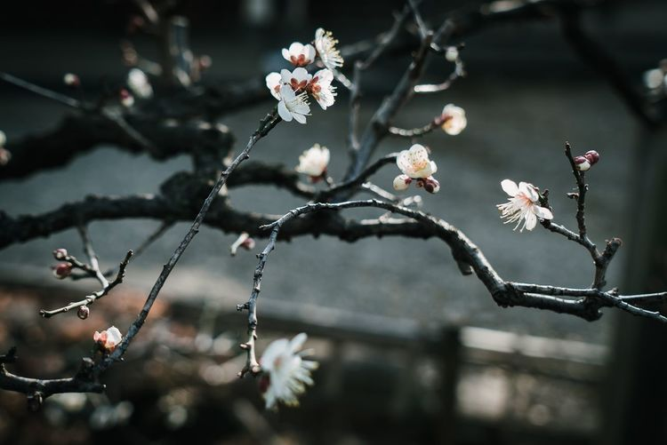 Flower Flowering Plant Plant Freshness Fragility Focus On Foreground Vulnerability  Inflorescence Flower Head Tree Day Petal Beauty In Nature Growth Nature Outdoors Close-up No People Branch Twig