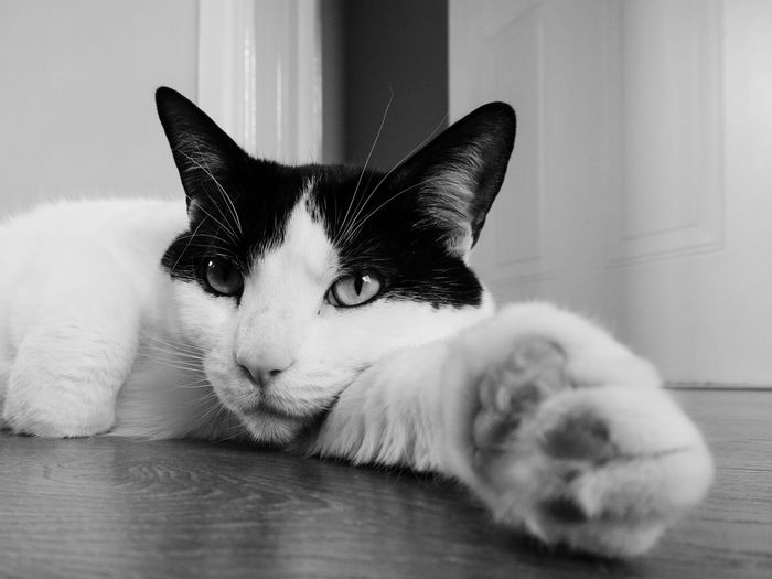 Miss Dazey Cat Cat Lovers Catoftheday Cateyes Black&white Black And White Photography