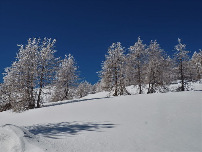 Trees on snow covered land against blue sky