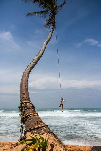 View of palm tree on calm beach