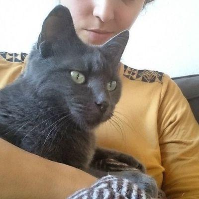 Bei vier Katzen hat immer jemand Lust zu kuscheln 💓 Tshaga_the_cat