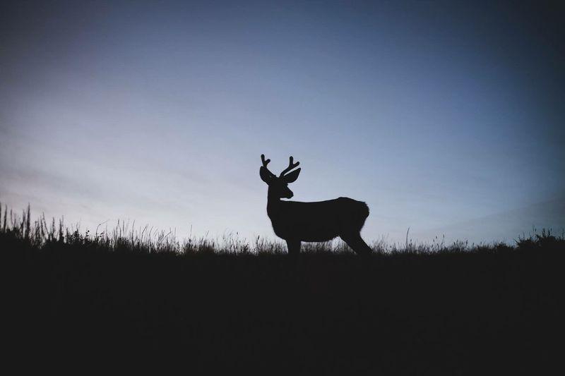 Silhouette deer standing on field against sky