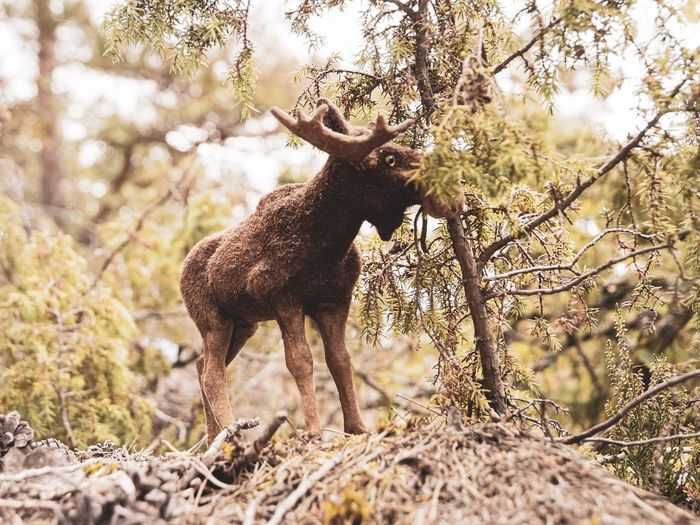 Toy moose in a forest