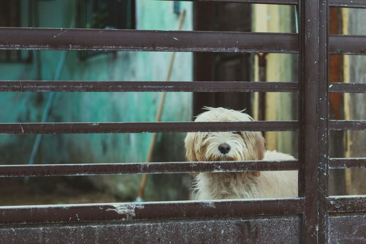 Close-up of dog behind fence