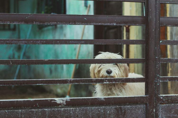 Close-up of dog behind fence