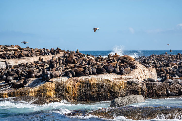 View of sea lions on rocks at sea