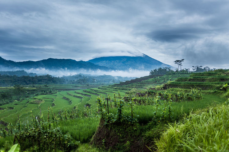 morning scene of mt. Sumbing. Landscape Morning Morning Sky Cloud - Sky Beauty In Nature Green Color Environment Plant Field Farm Mountain Range Outdoors Mountain Agriculture