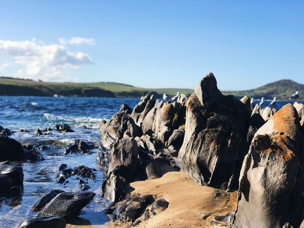 Birds Seagull Sky Water Sea Nature Rock Scenics - Nature Beauty In Nature Tranquility Rock - Object Solid Rock Formation Outdoors Land Day Beach Sunlight