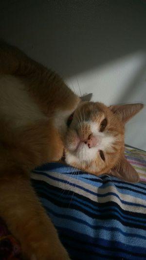 Cat Catselfie