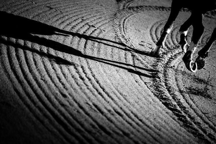 Atardecer Light, Morning Light Shadows & Lights Blackandwhite Blasian  Caballo Ecuestrian Equine Photography Equitacion