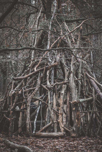 Tree Forest Plant Land Nature No People Tranquility Branch Day WoodLand Trunk Tree Trunk Bare Tree Outdoors Root Beauty In Nature Growth Non-urban Scene Wood - Material Tranquil Scene Dead Plant Complexity Tangled Selfmade Tippi